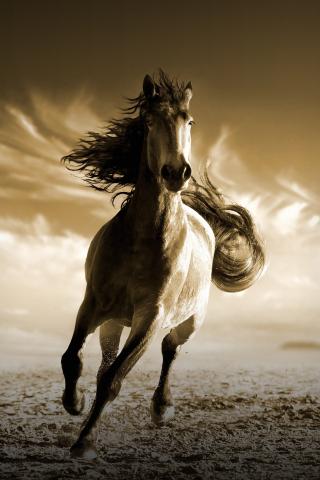 Download 240x320 Wallpaper Running Horse Animal Old Mobile
