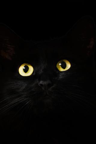 Black Cat Muzzle Animal Yellow Eyes 240x320 Wallpaper