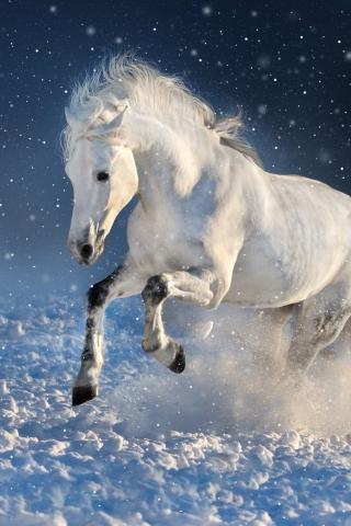 Download 240x320 Wallpaper White Horse Run Mammal Portrait Old