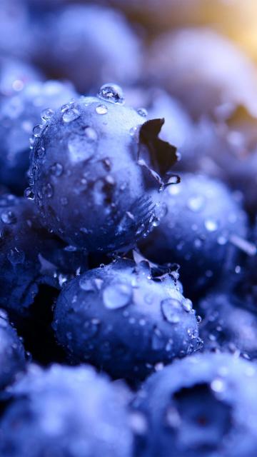 Blueberries, drops, macro, 360x640 wallpaper
