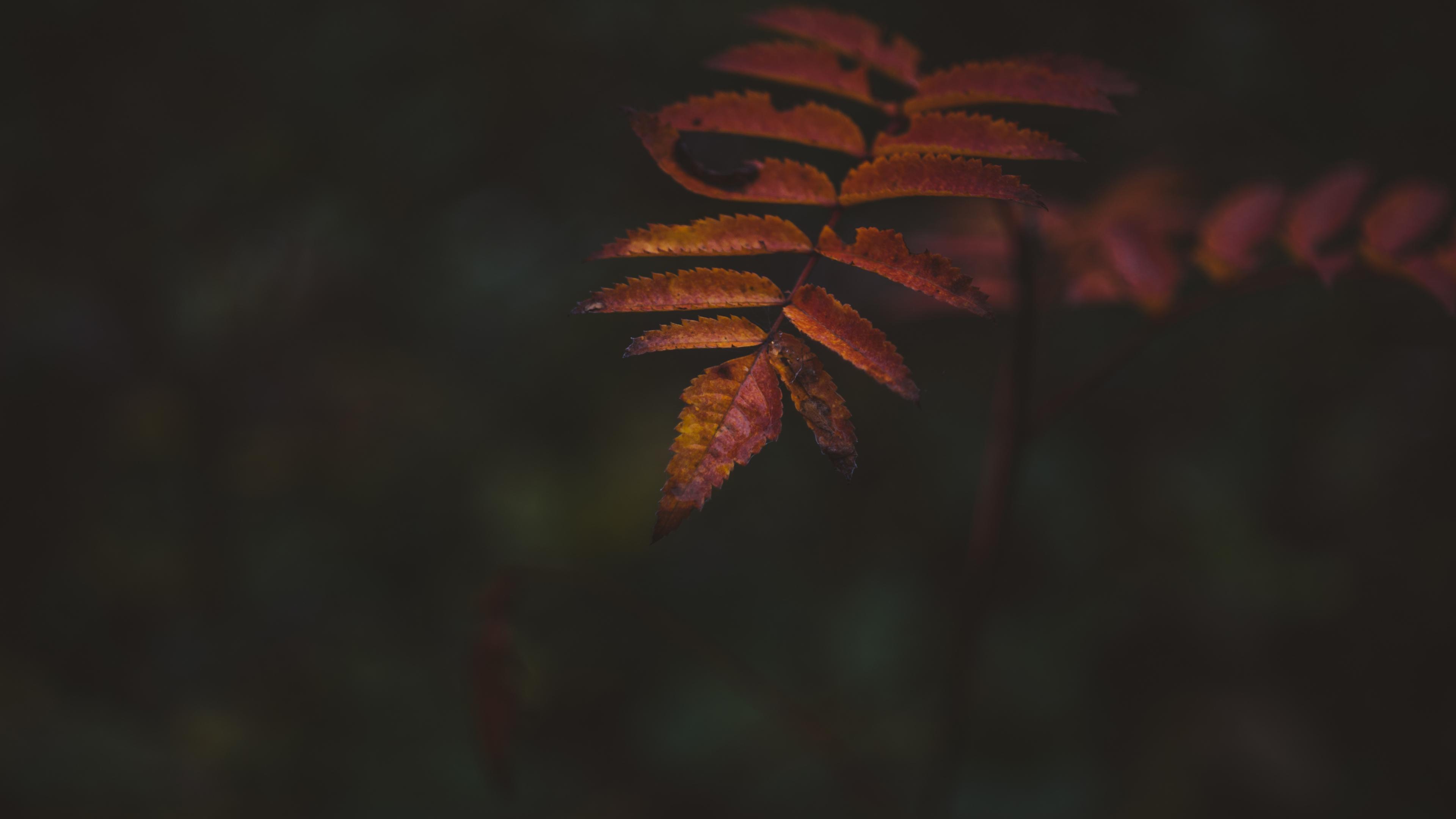Autumn, portrait, leaf, 3840x2160 wallpaper