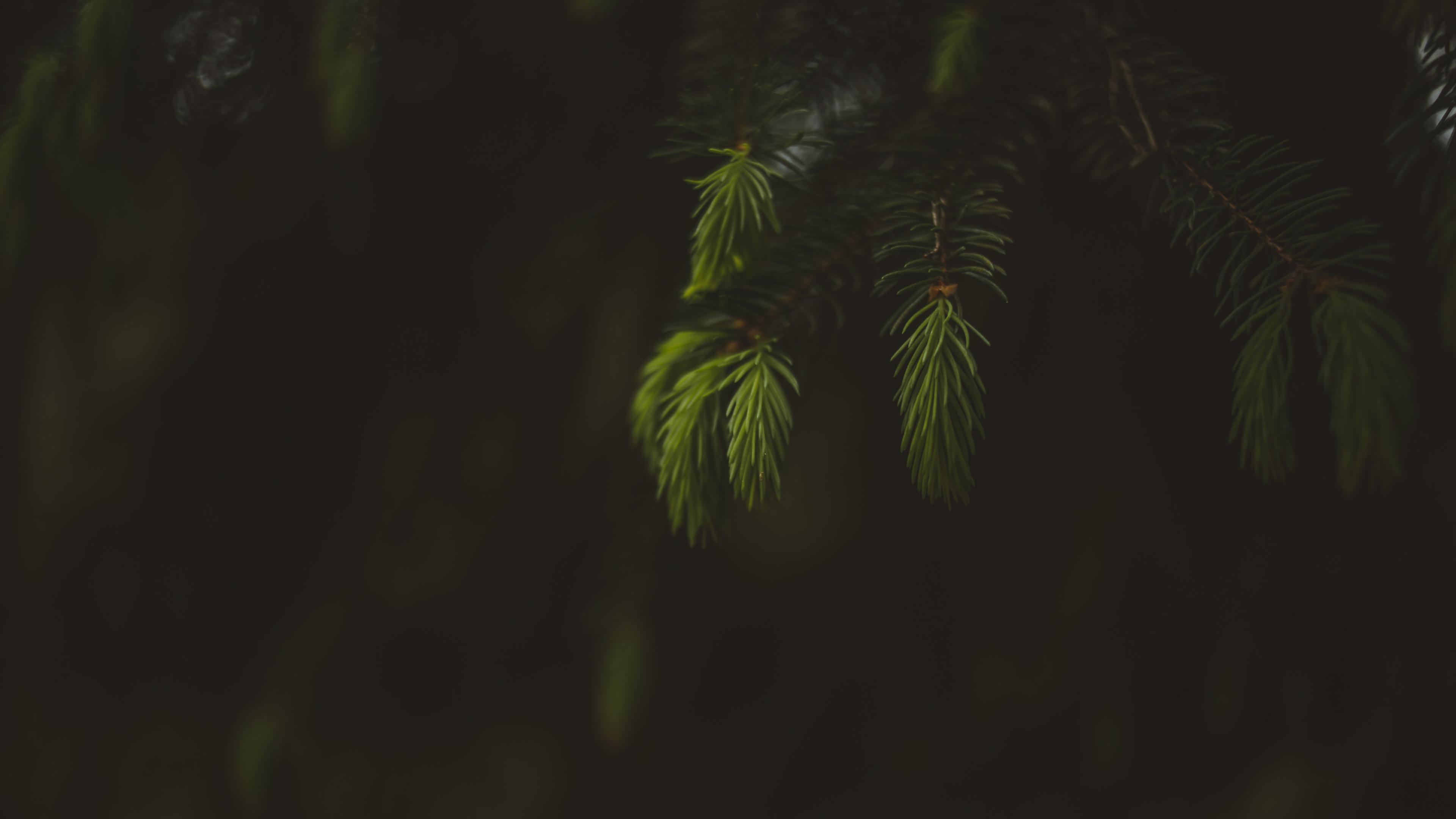 Blur, portrait, leaf, fern, 3840x2160 wallpaper