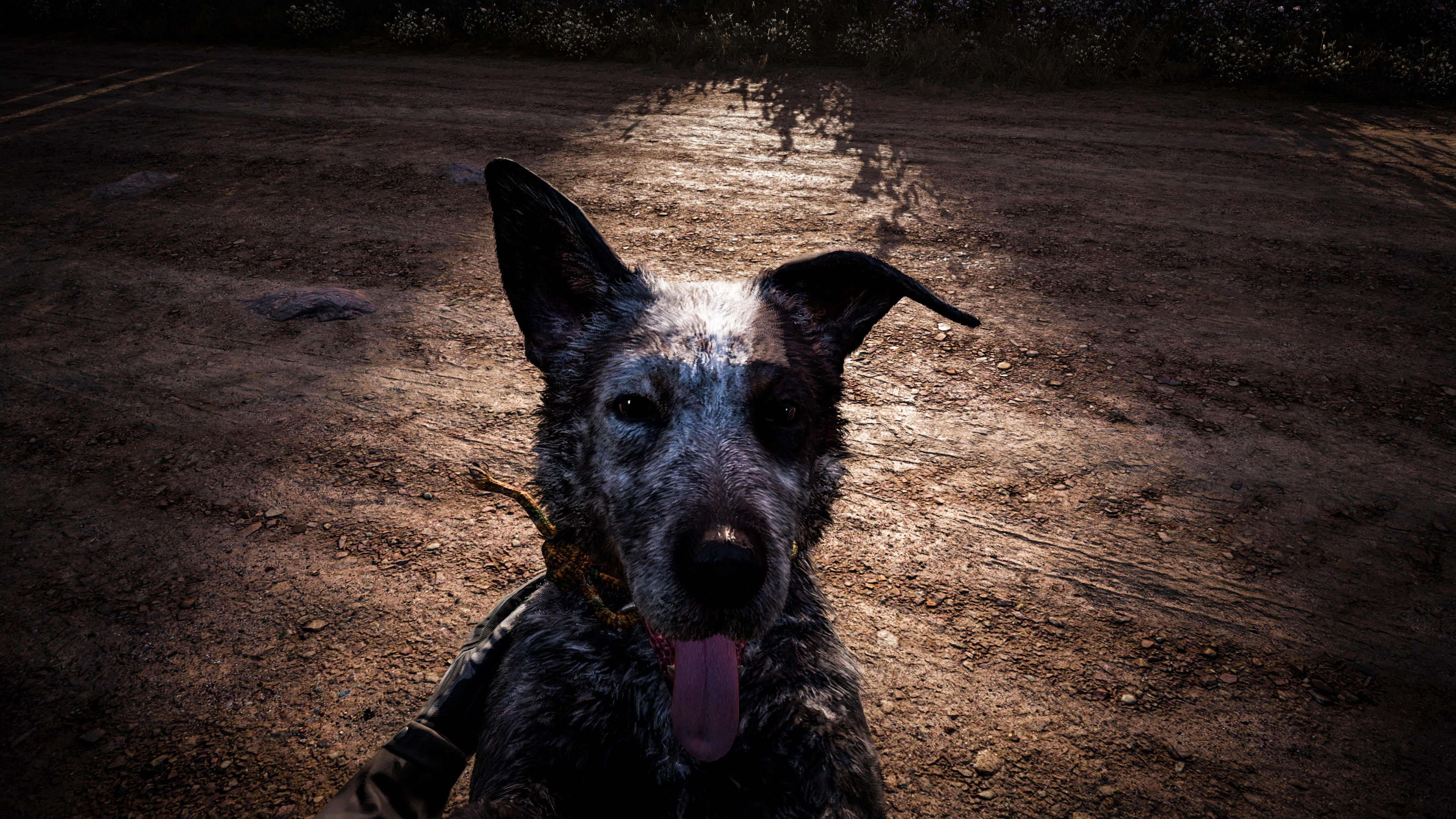 Download 3840x2400 Wallpaper Dog Muzzle Far Cry 5 Video Game 4k Ultra Hd 16 10 Widescreen 3840x2400 Hd Image Background 5945