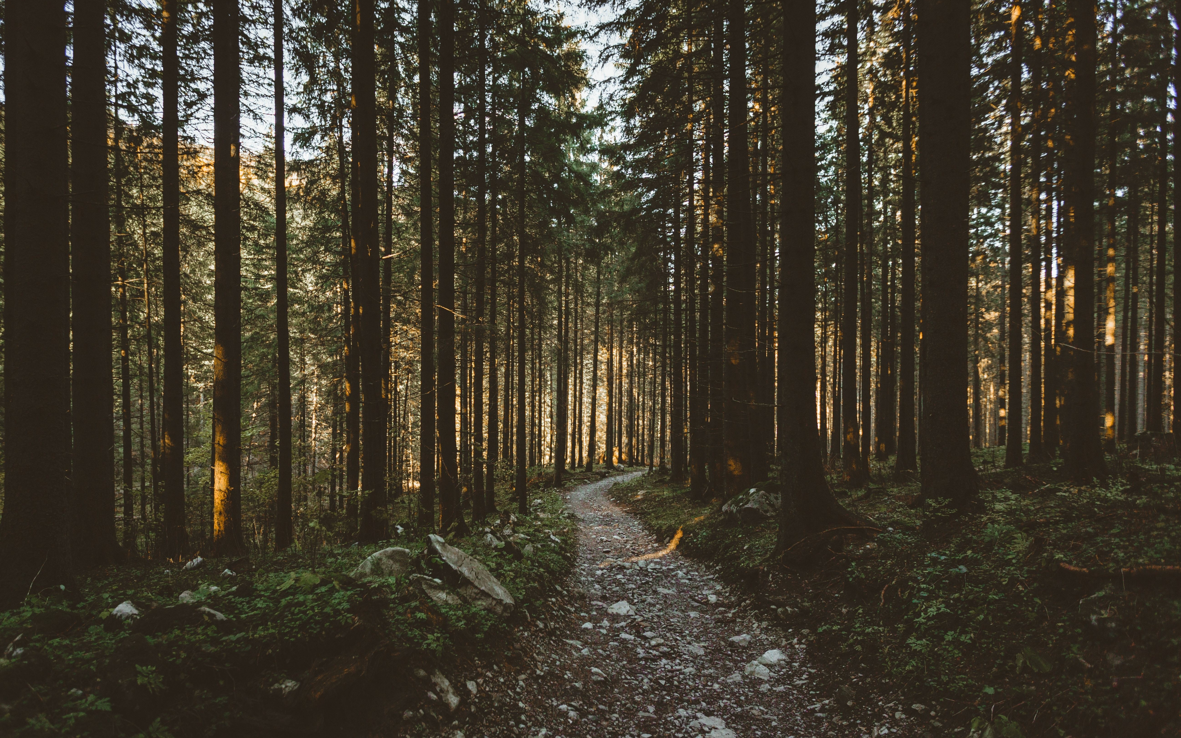 Download 3840x2400 wallpaper sunbeams morning forest pathway nature 4k ultra hd 16 10 - Background images 4k hd ...