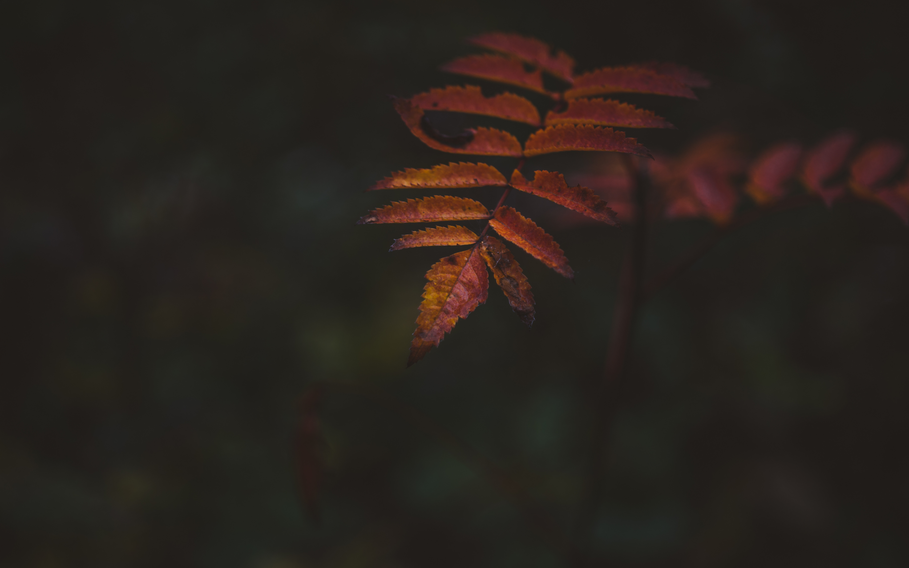 Autumn, portrait, leaf, 3840x2400 wallpaper