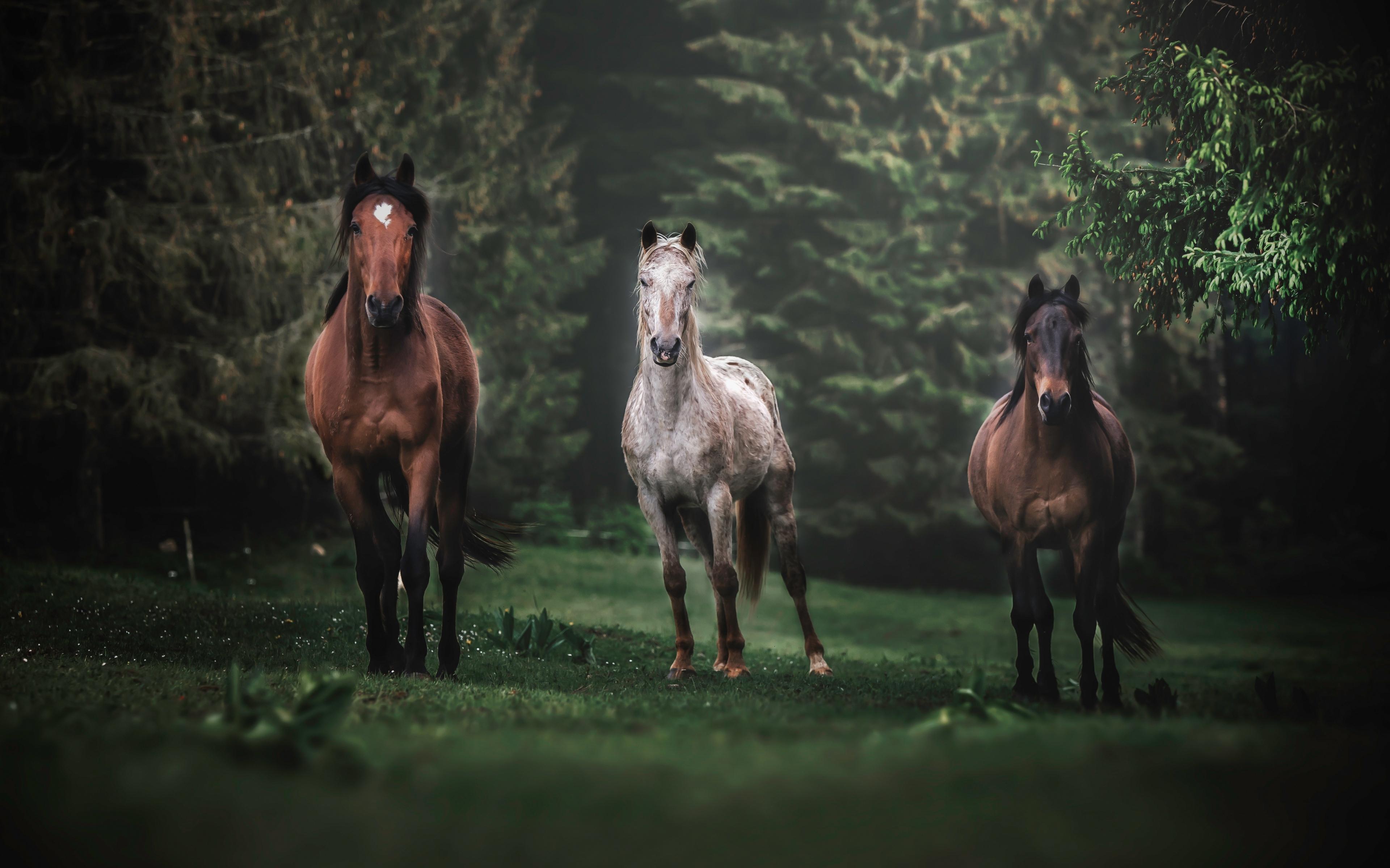 Download 3840x2400 Wallpaper Horses Animals Herd Run Portrait