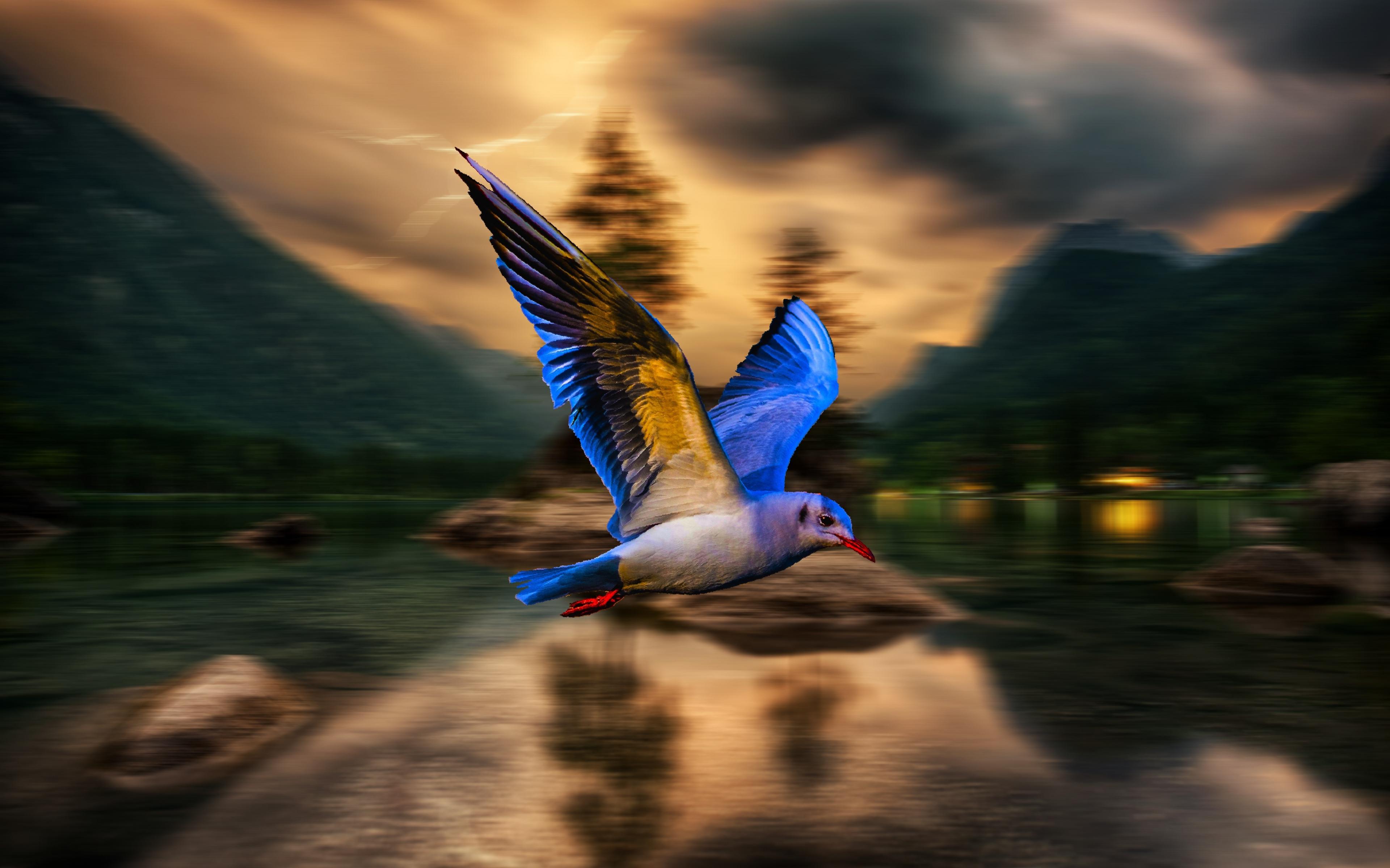Download 3840x2400 Wallpaper Blue Bird Blur Flight 4k Ultra Hd 16 10 Widescreen 3840x2400 Hd Image Background 4867