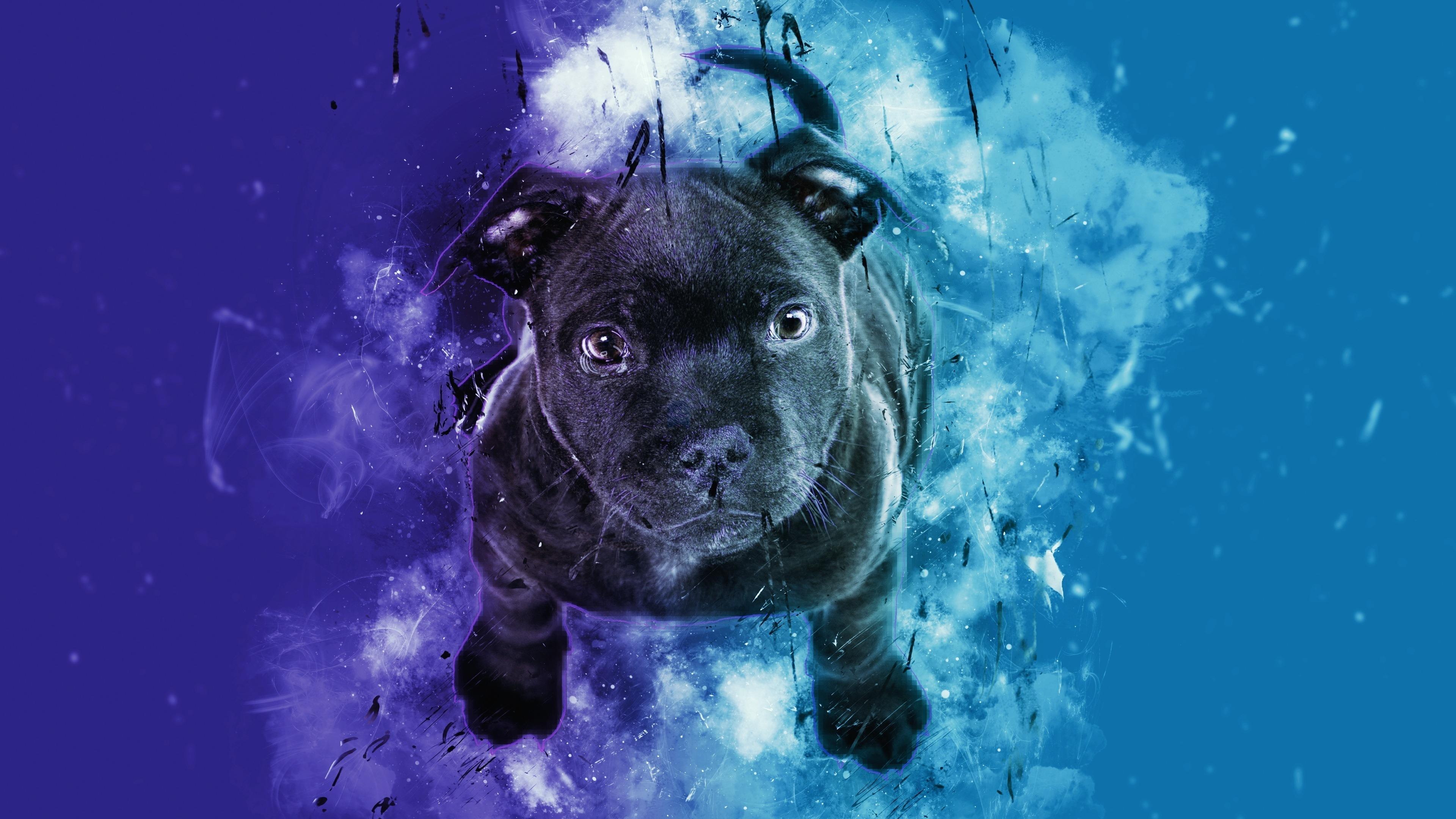 Download 3840x2400 wallpaper black puppy, dog, cute ...
