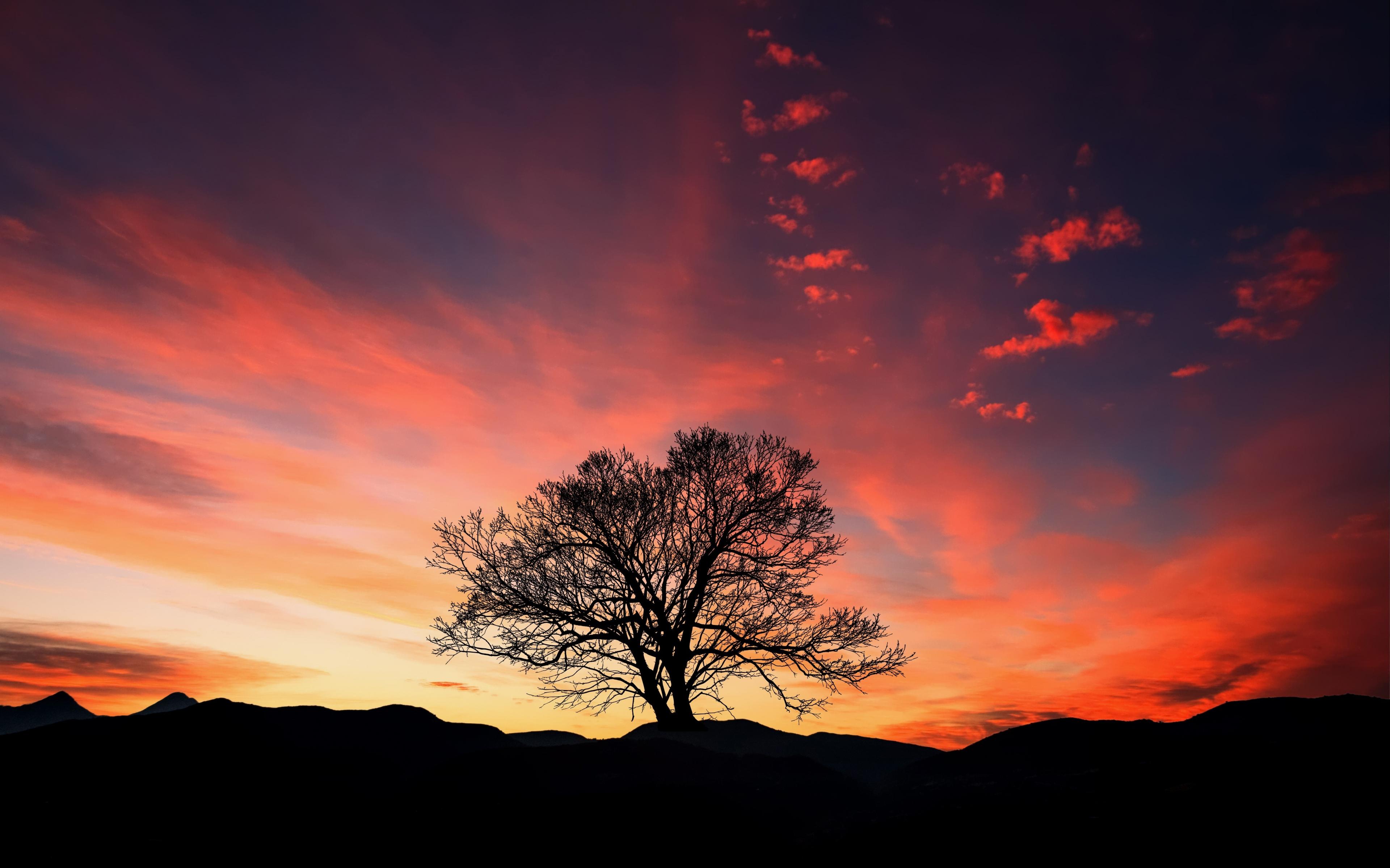 одинокое дерево небо закат скачать