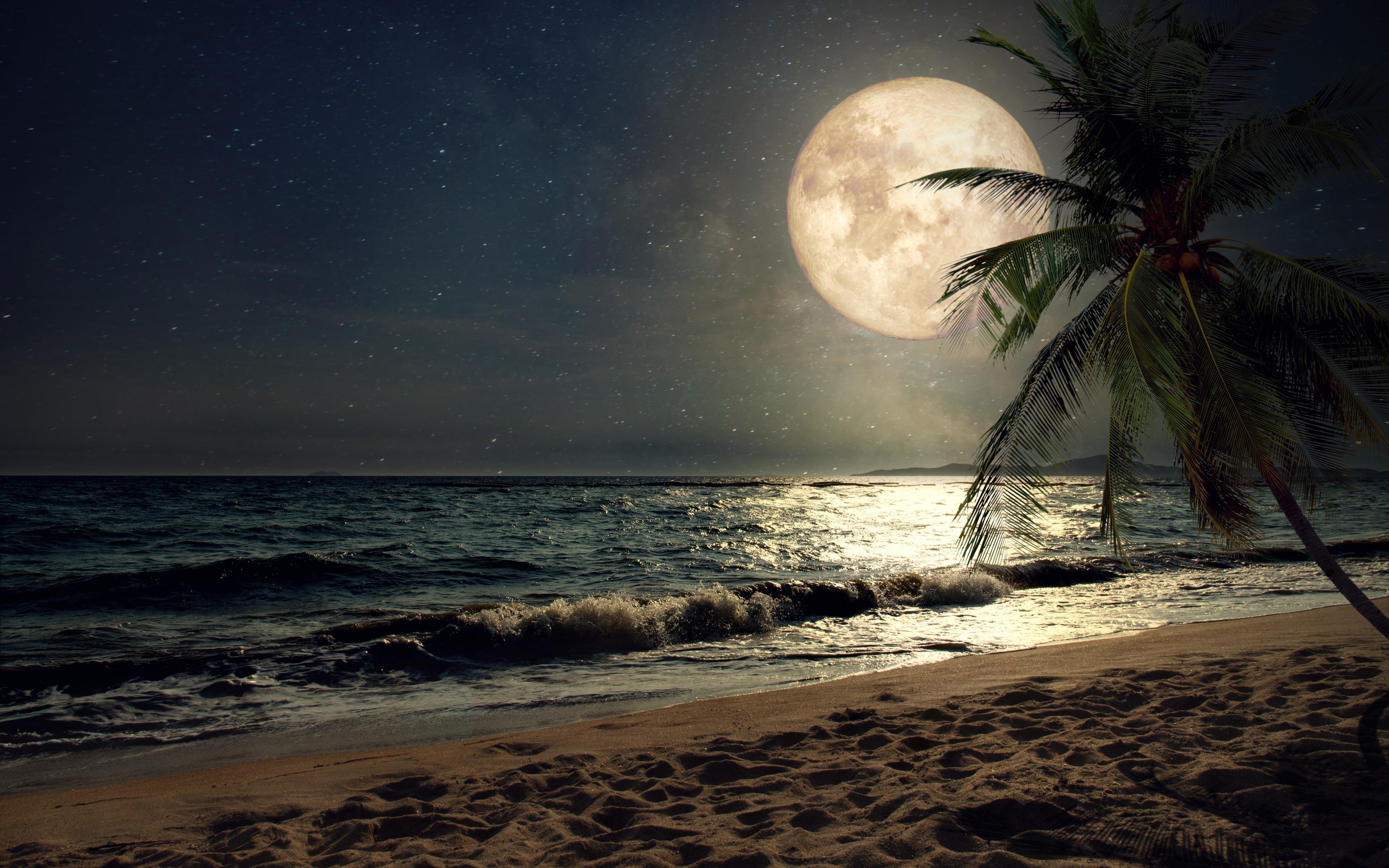 Download 3840x2400 Wallpaper Beach Sand Night S Moon Palm Tree