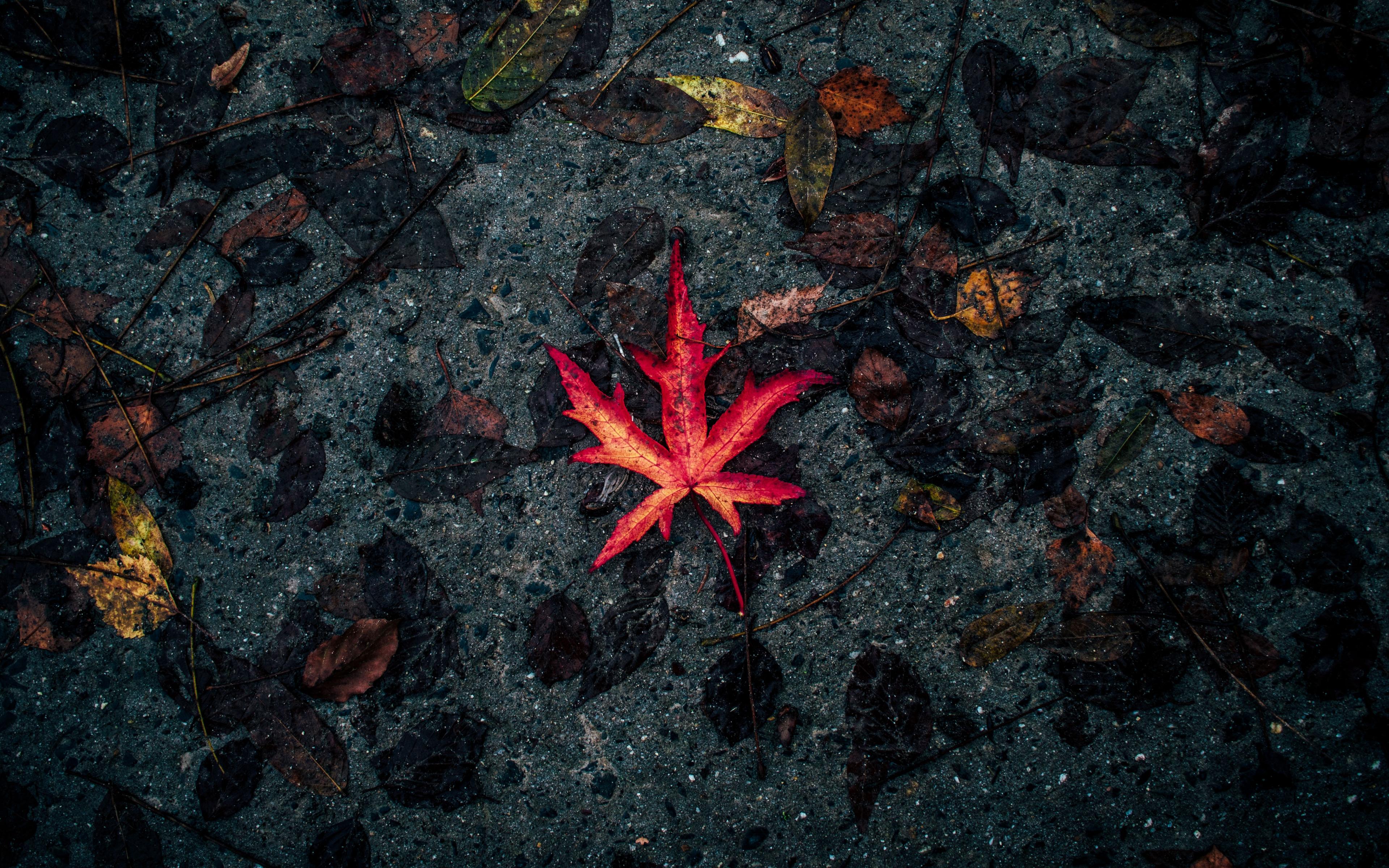 Download 3840x2400 Wallpaper Leaf Fall Autumn 4k Ultra