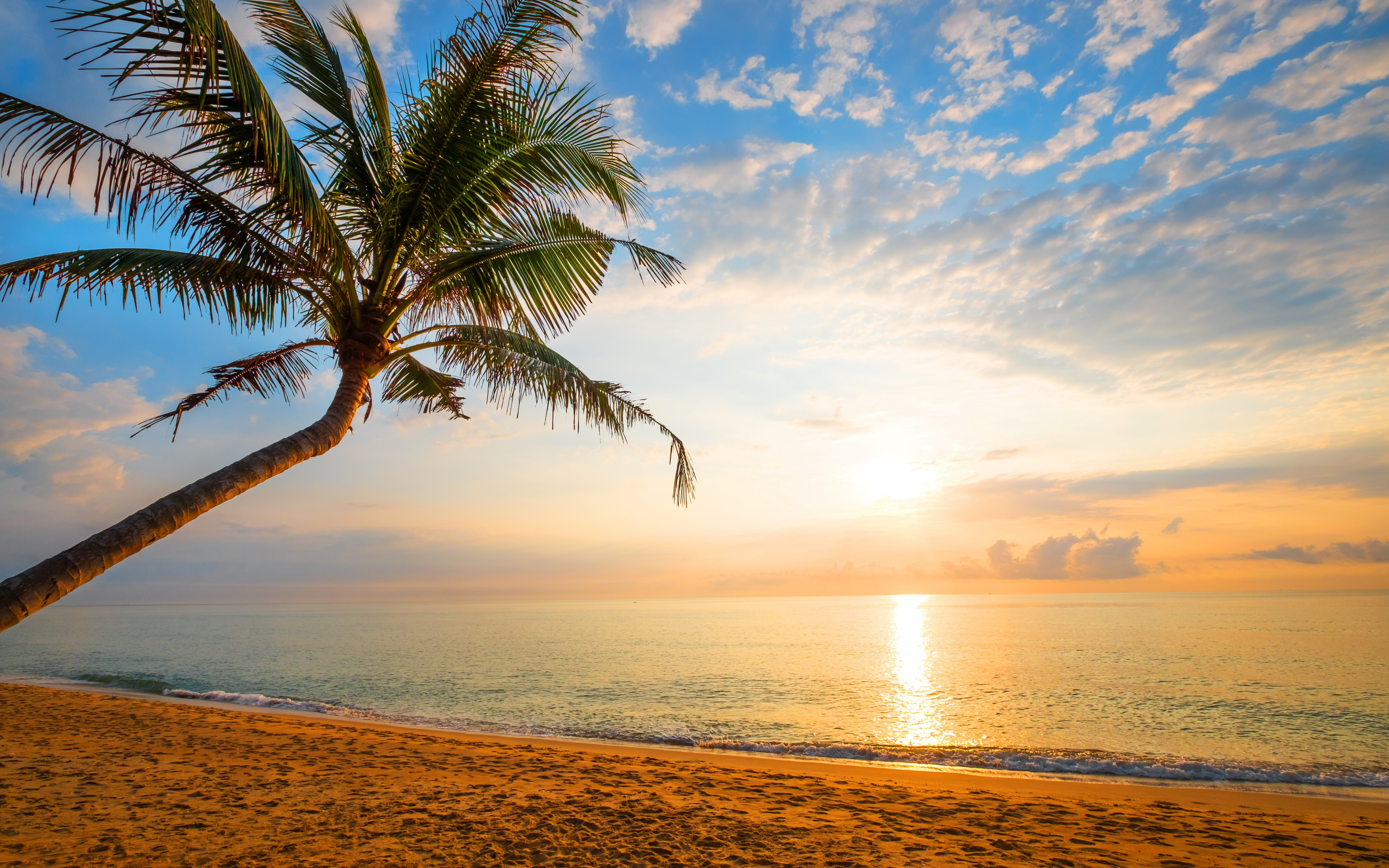 Download 3840x2400 Wallpaper Palm Tree Sand Beach Sunny Day