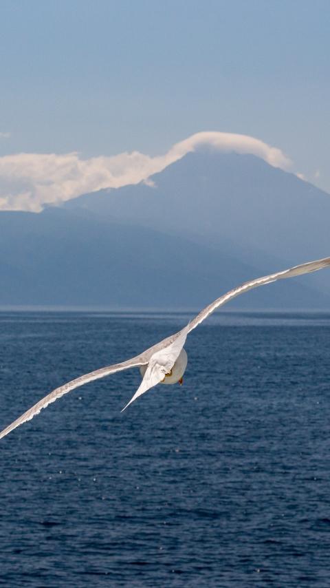 White bird, flight, sea, seagull, 480x854 wallpaper