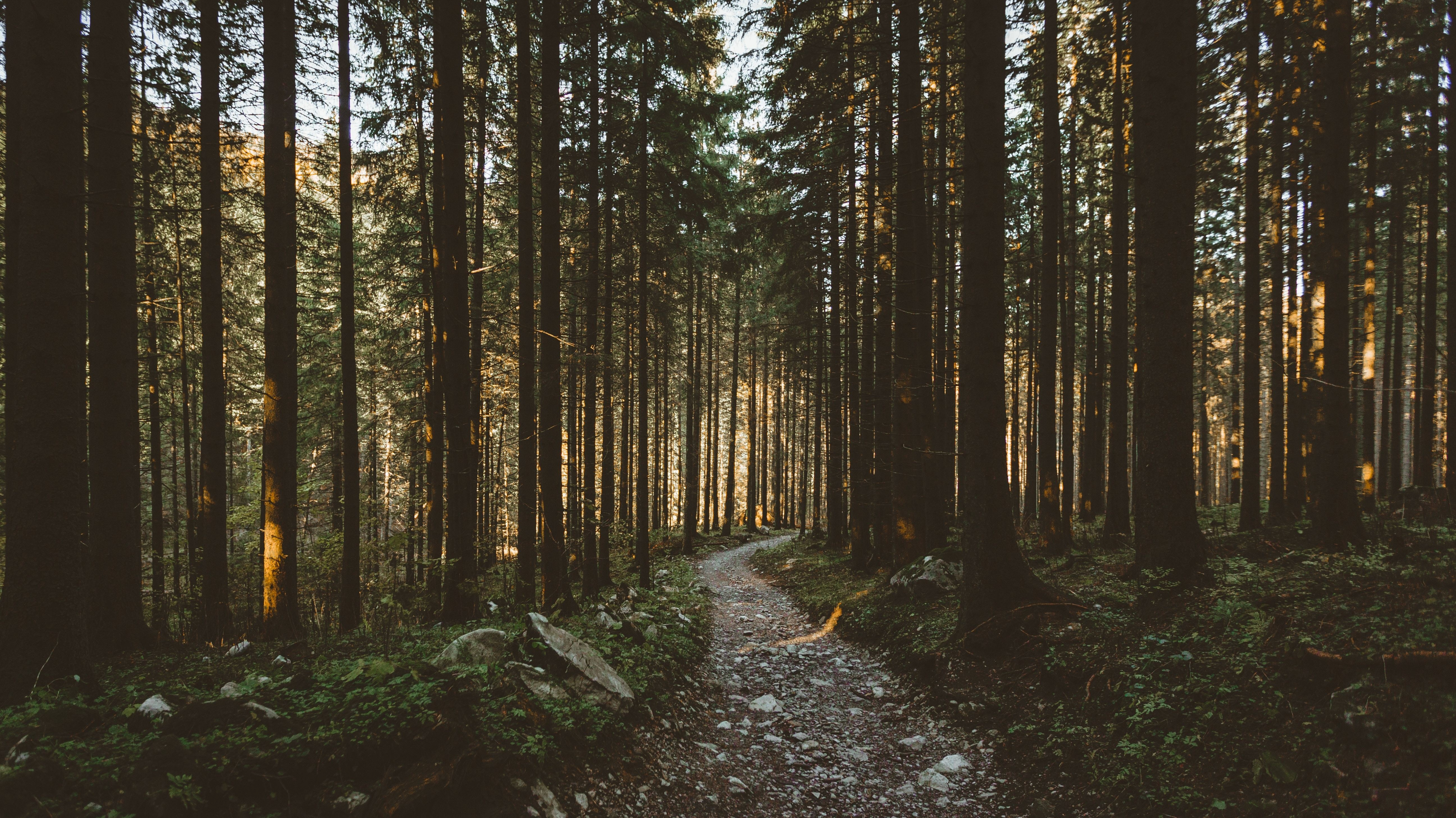 Dirt Pathway Forest Trees Nature 5120x2880 5k Wallpaper