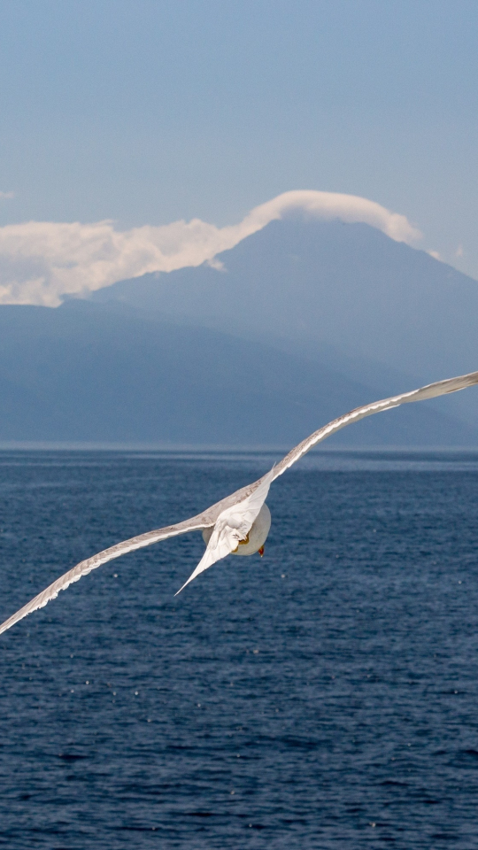 White bird, flight, sea, seagull, 540x960 wallpaper