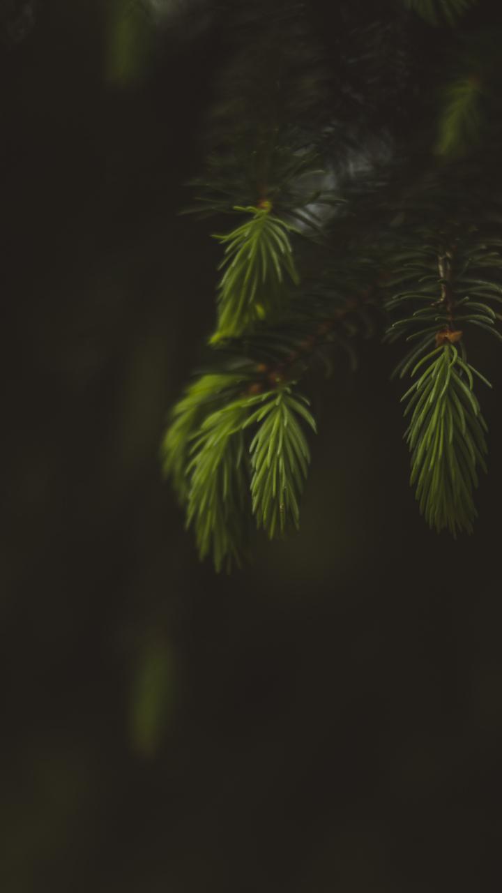 Blur, portrait, leaf, fern, 720x1280 wallpaper