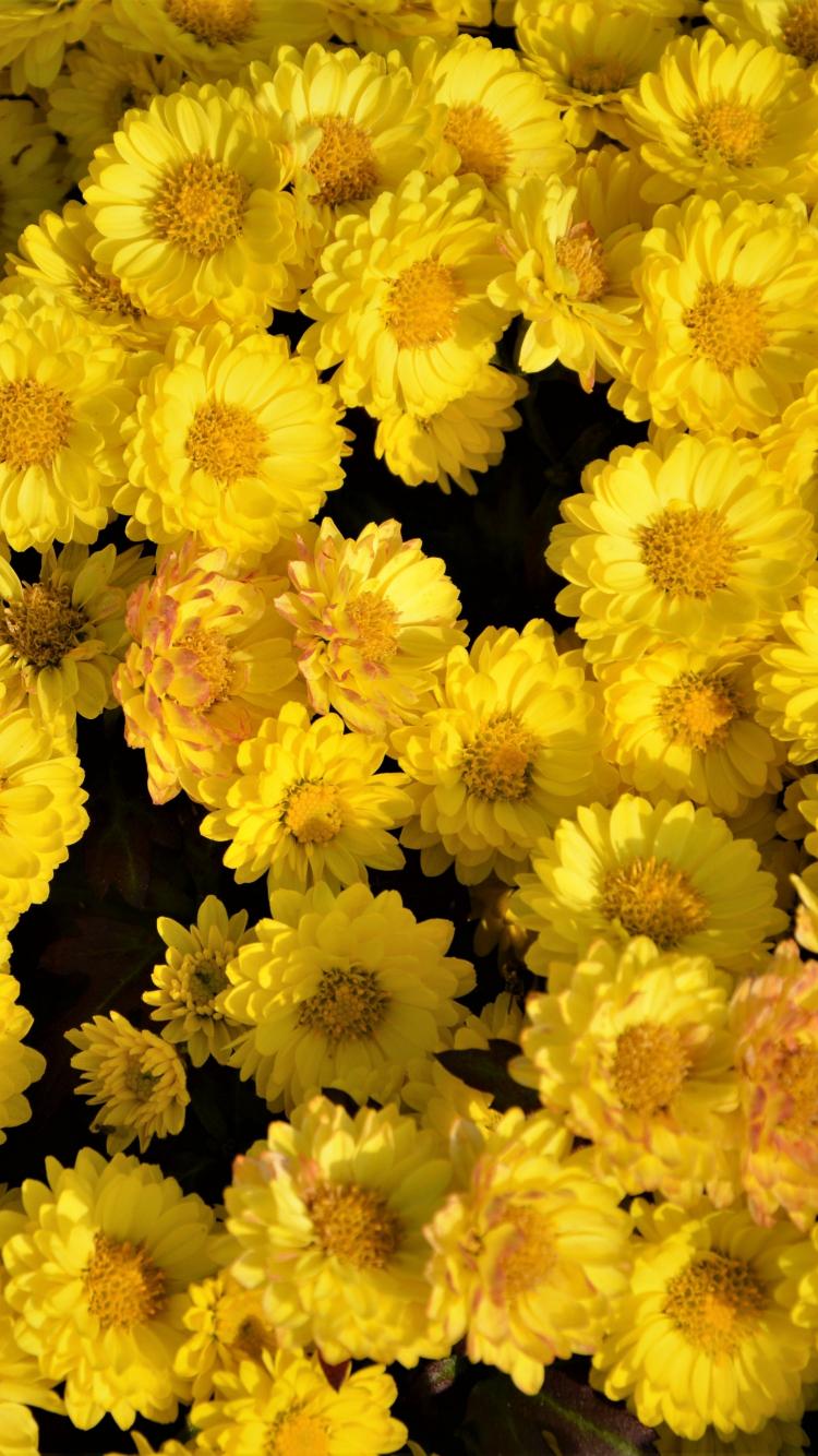 Download 750x1334 Wallpaper Yellow Flowers Arrangement