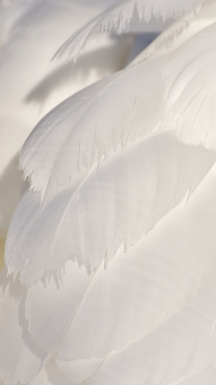 Download 750x1334 Wallpaper White Feathers Swan Close Up