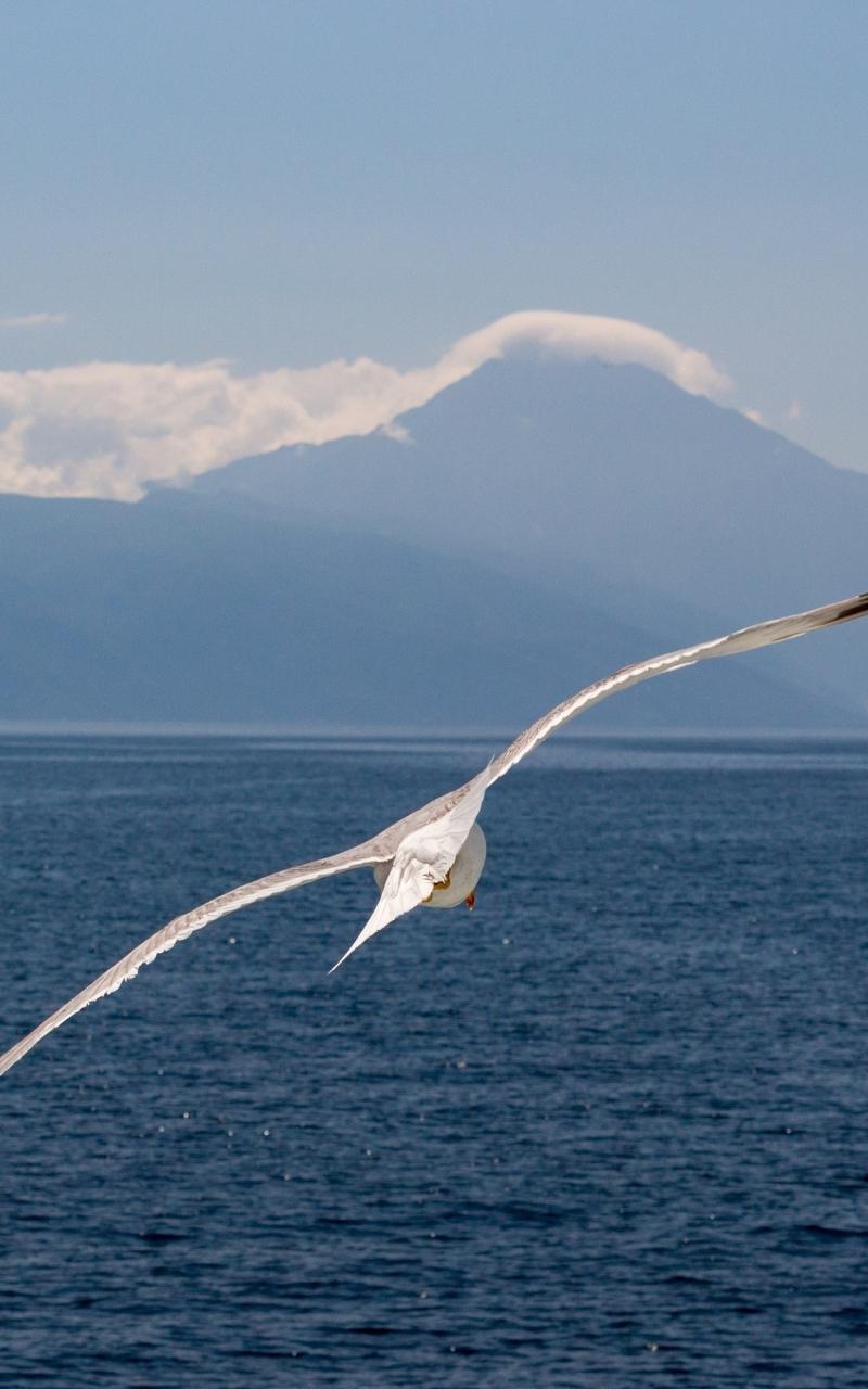 White bird, flight, sea, seagull, 800x1280 wallpaper