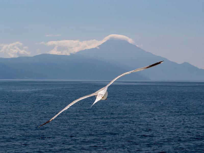 White bird, flight, sea, seagull, 800x600 wallpaper