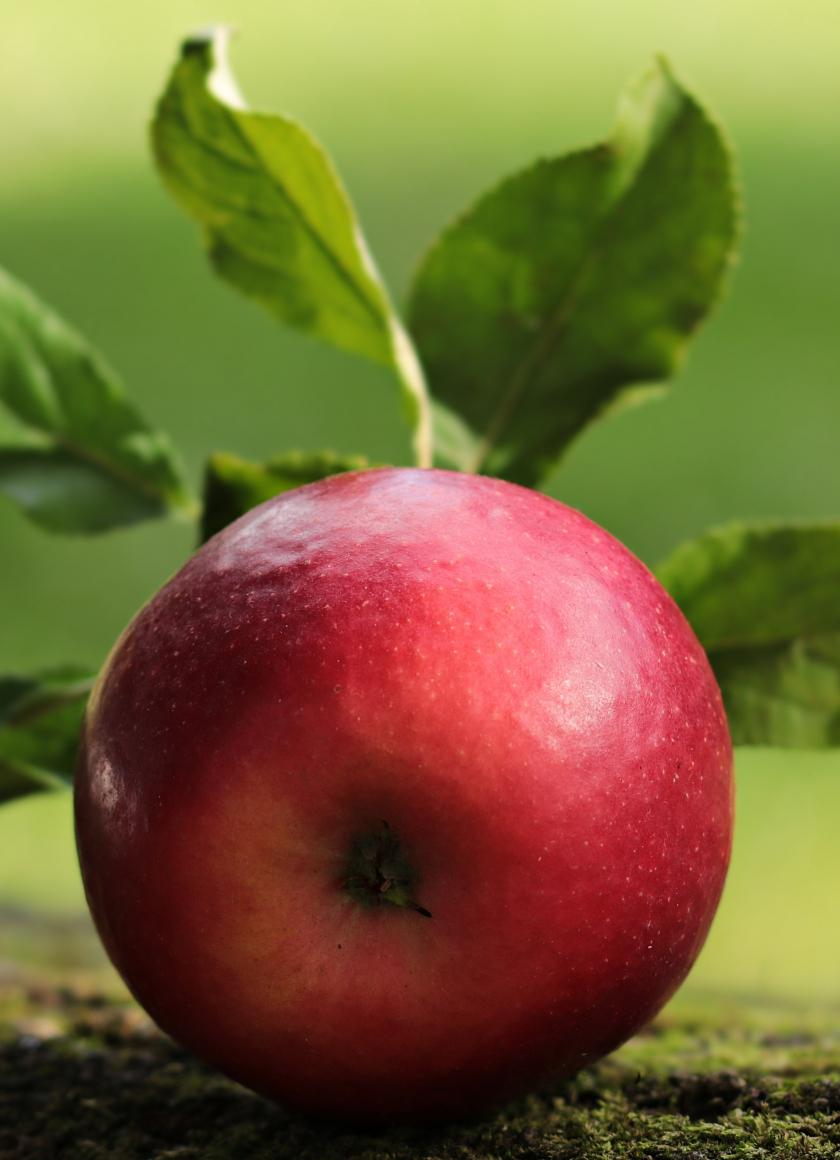 Apple, fruit, close up, 840x1160 wallpaper