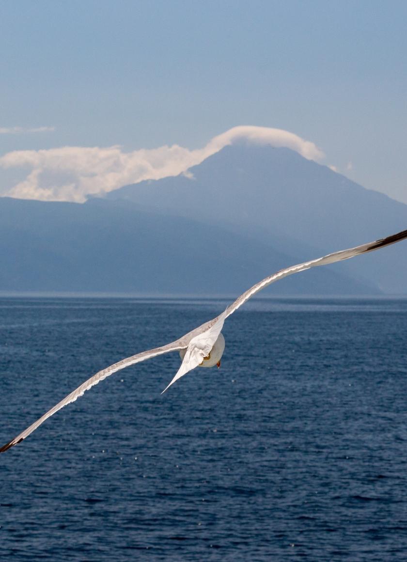 White bird, flight, sea, seagull, 840x1160 wallpaper
