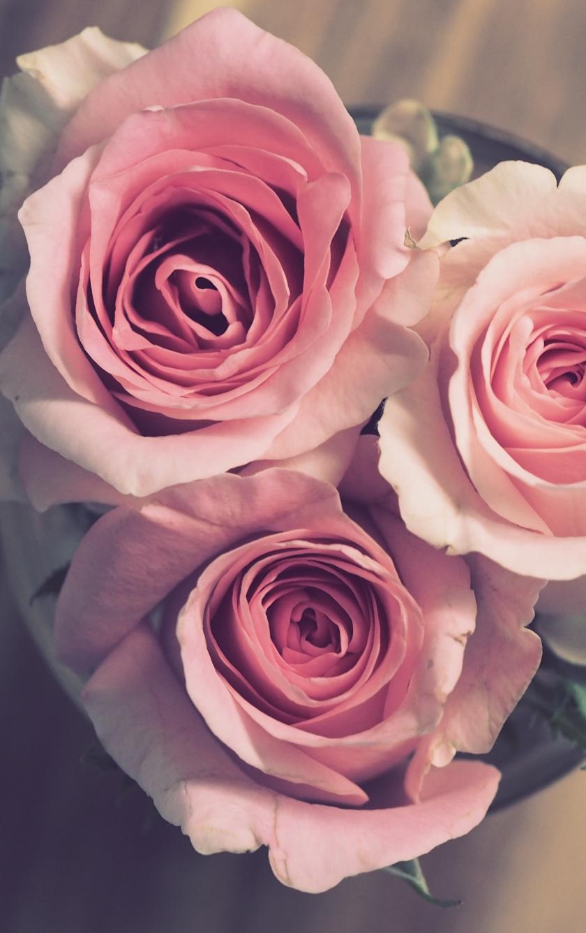 Bouquet, pink roses, bloom, 840x1336 wallpaper