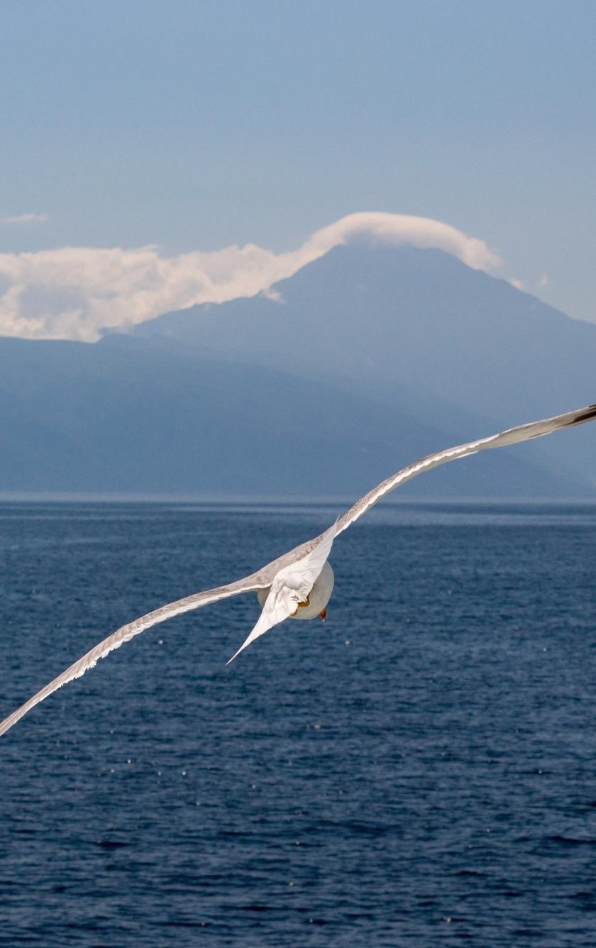 White bird, flight, sea, seagull, 840x1336 wallpaper