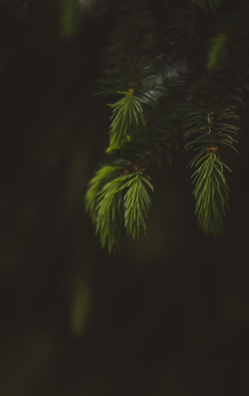 Blur, portrait, leaf, fern, 840x1336 wallpaper