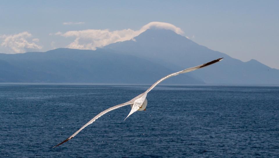 White bird, flight, sea, seagull, 960x544 wallpaper