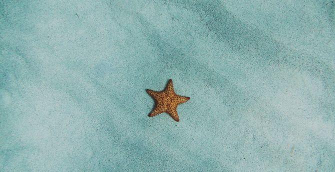 Starfish sand fish