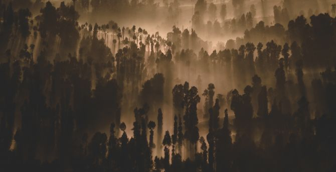 Dark, forest, trees, misty day, nature wallpaper