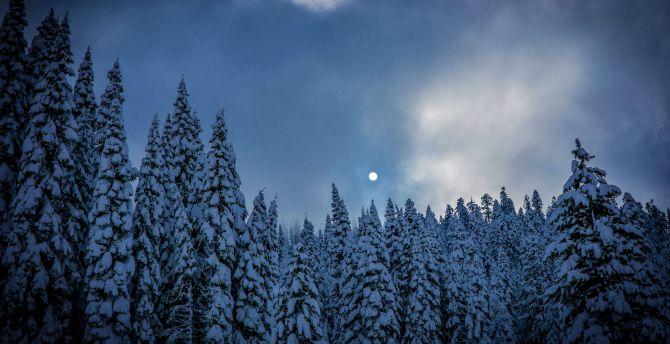 Winter, night, trees, sky, nature wallpaper