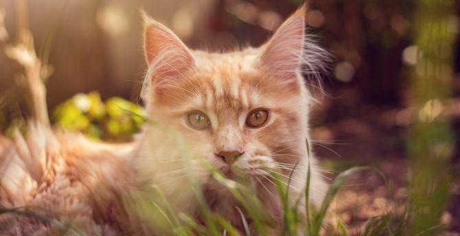 Cat behind grass, cute muzzle, animal wallpaper