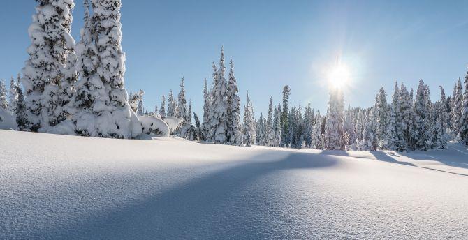 Strathcona provincial park, winter, pine trees, landscape, canada wallpaper