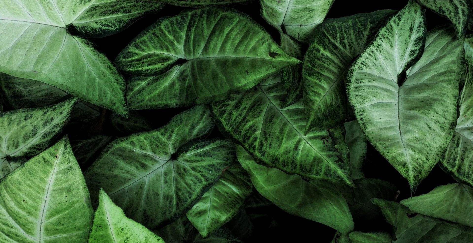 Desktop wallpaper house plants, leaves, hd image, picture ...