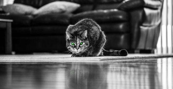Green eyes, cat, monochrome wallpaper