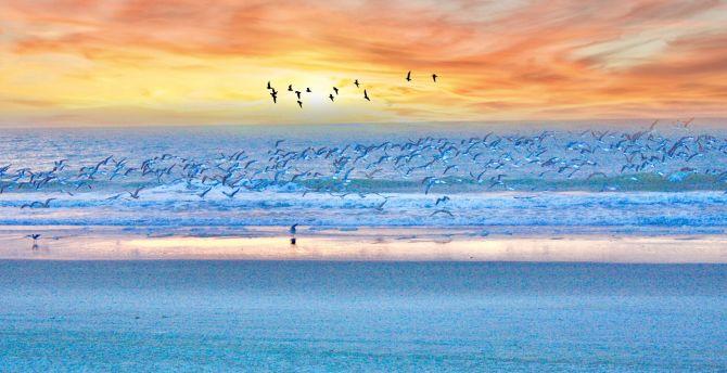 Seagulls, birds, beach, sunset, sea wallpaper