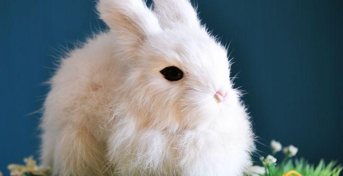 Cute White Bunny Animal Rabbit Wallpaper