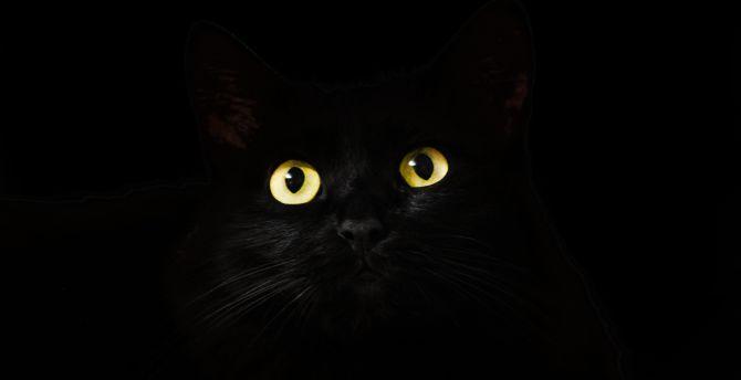 Black cat muzzel 4k