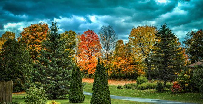 Autumn garden tree 4k