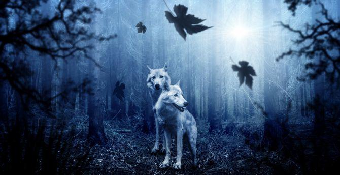 Wolf, predator, forest, wildlife wallpaper