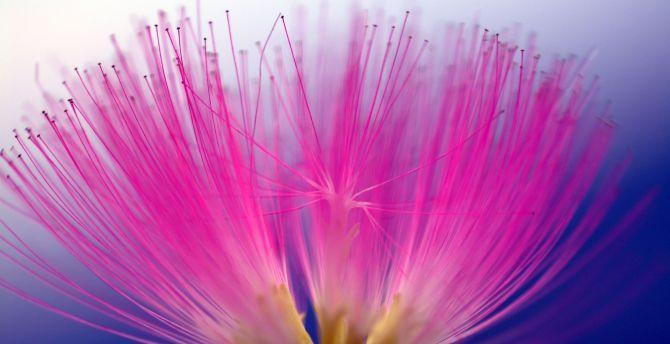 Bloom pink flowers pollen