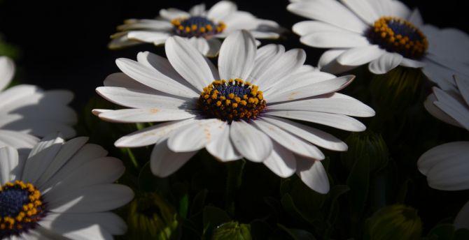 White flowers pollen 4k