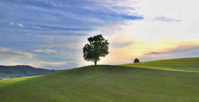 Landscape, nature, grass field, lone tree wallpaper