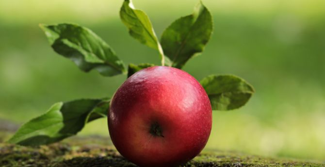 Apple, fruit, close up wallpaper