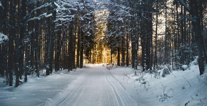 Winter, snow road, trees, nature wallpaper