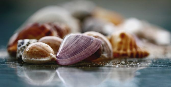 Seashells, colorful, blur, close up wallpaper