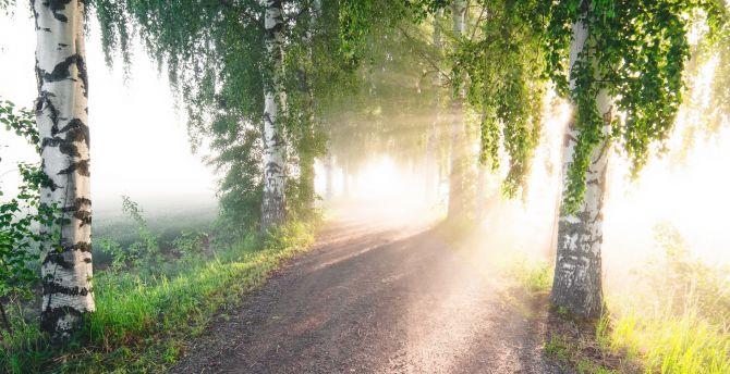 desktop wallpaper summer, sunlight, dirt road, trees, hd image