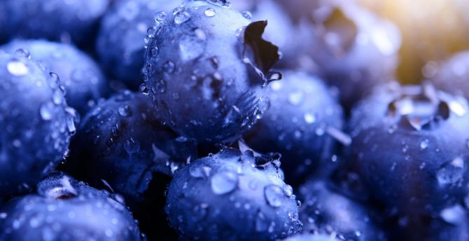 Blueberries, drops, macro wallpaper